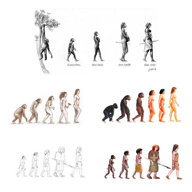 linea evolutiva, ilustracion, mujer