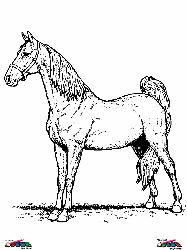 HD wallpapers coloriage licorne a imprimer gratuit