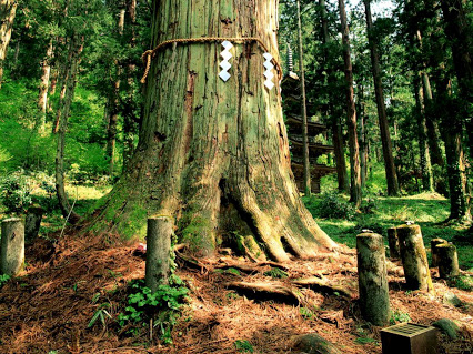 Bentuk Pohon Paling Unik di Dunia