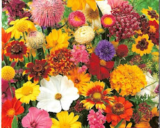Mas como nós mulheres amamos flores, hein...