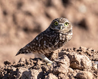 The Owl of October 2019