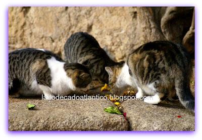 Gatos comendo pão numa rua na cidade de Cáceres, Espanha