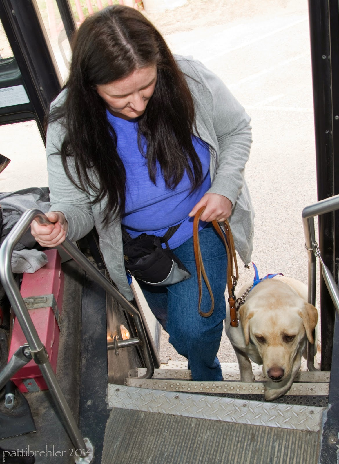 This photo is shot from inside the school bus looking down the stairs. A woman with long brown hair wearing blue jeans, a light purple shirt with a gray zippered sweathshirt open over it, is stepping up and holding the railing with her right hand. She is holding a leash in her left hand, attached to a yellow lab who is stepping up the steps with her. The woman is looking down at the dog. She also has a black treat bag around her waist.