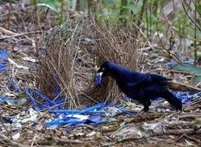 Eksotis Desainer Sarang Burung Namdur