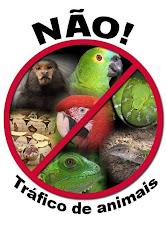 NÃO COMPRE ANIMAIS ILEGAIS !!