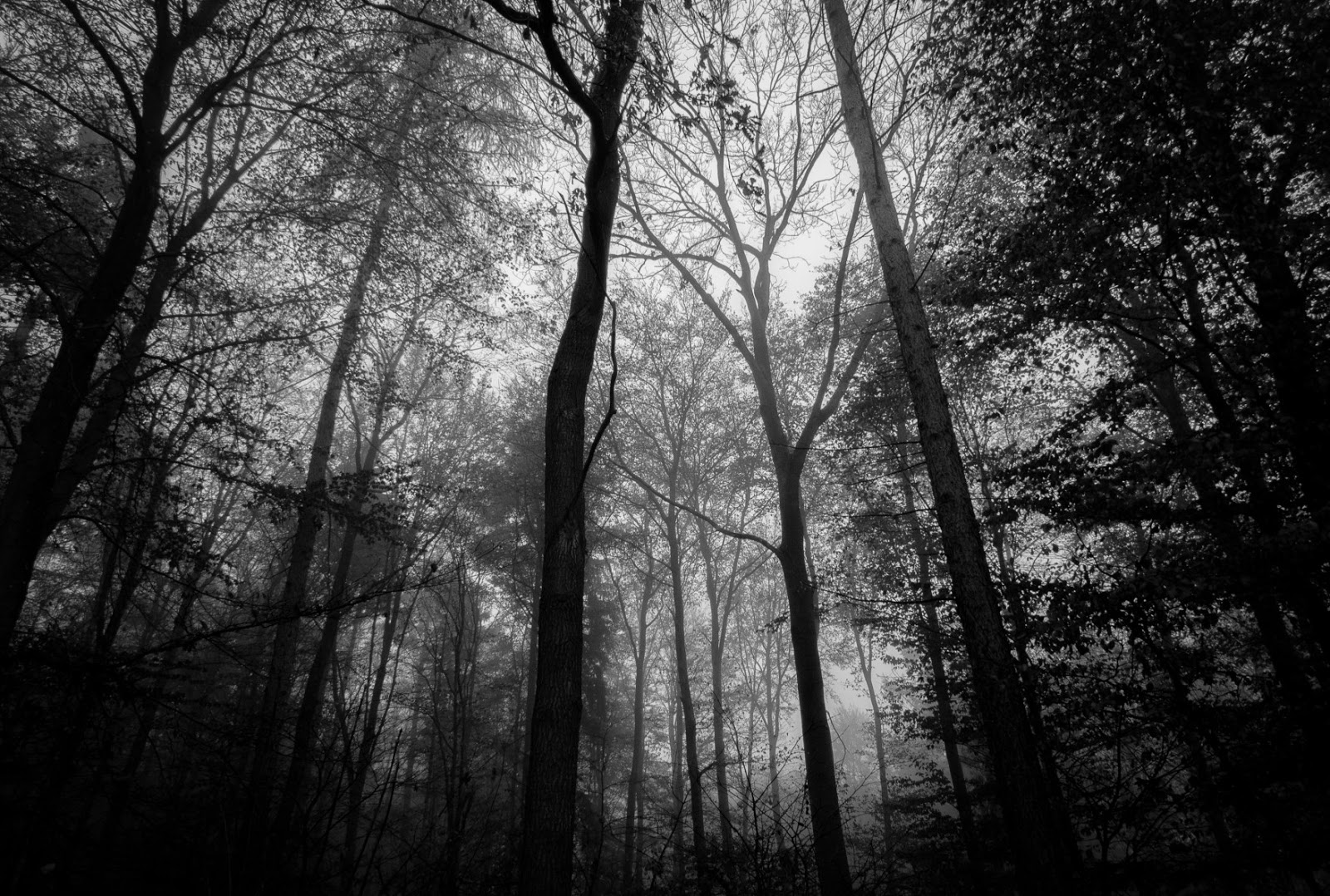 Matthew G. Beall vision driven fine art photography  ulm germany  Remember the Forest    2011