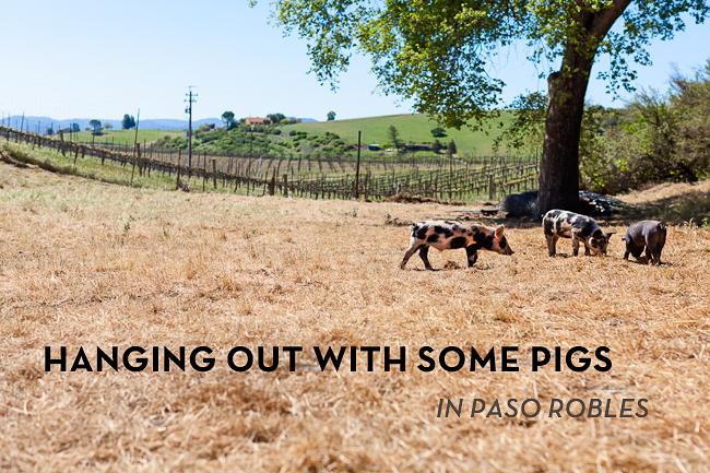 Sourcing Pork
