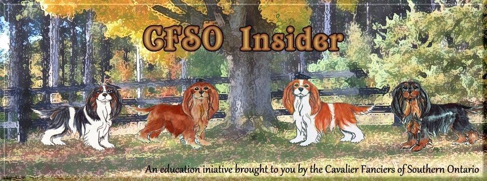 The CFSO Insider