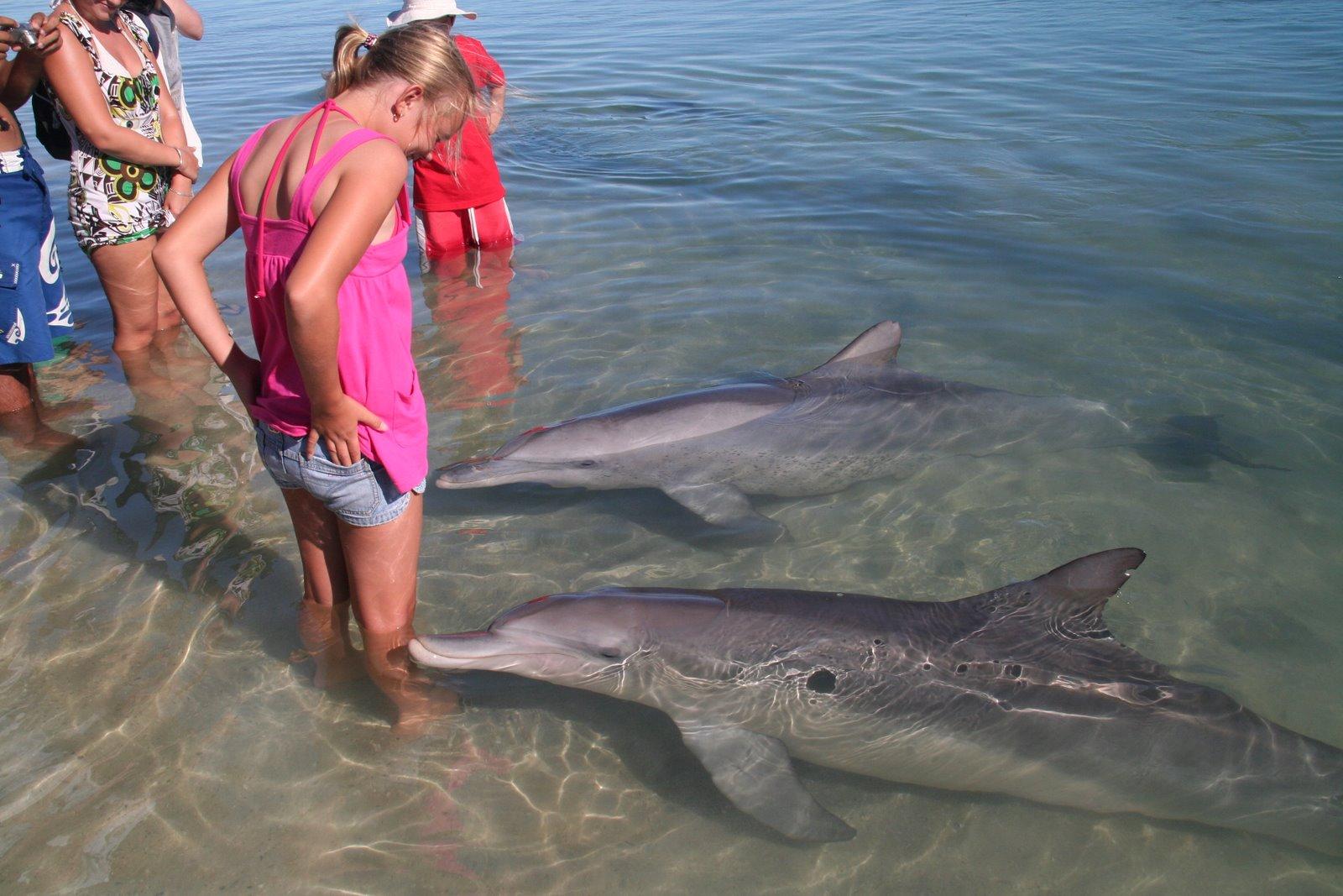 К чему снится дельфин в море гладить его