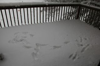 photo of tracks in the snow on the deck