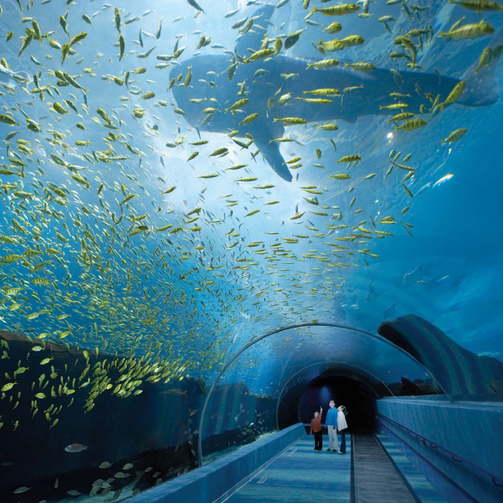 World Visits Georgia Aquarium In United States