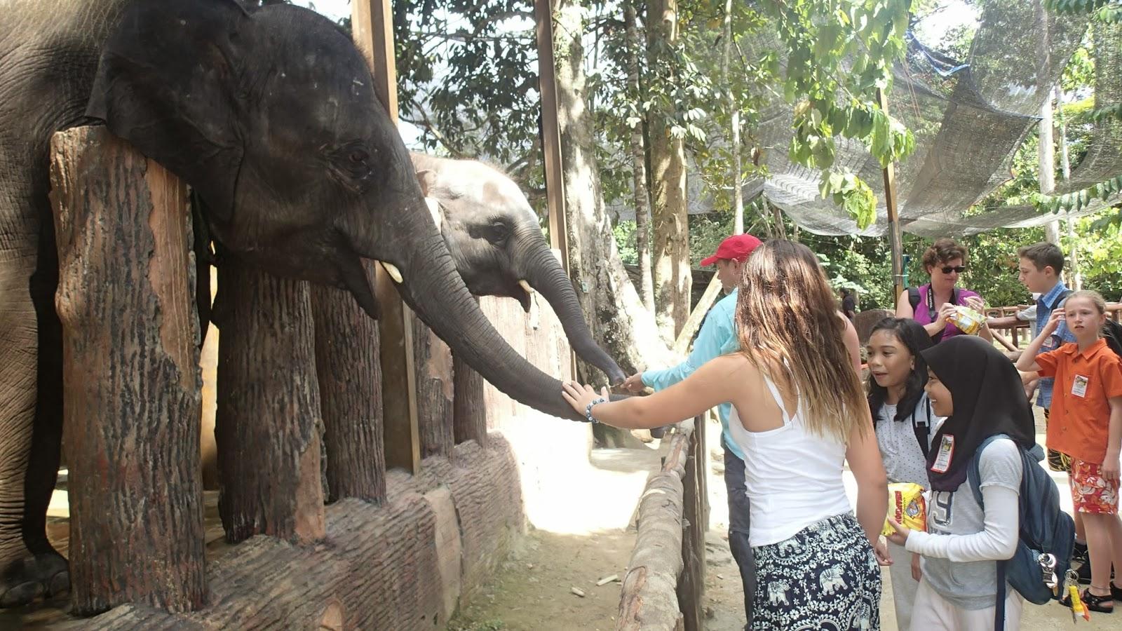Elephant Sanctuary Kuala Gandah +6019 662 2929  Website : www.malaysia-adventuretours.com