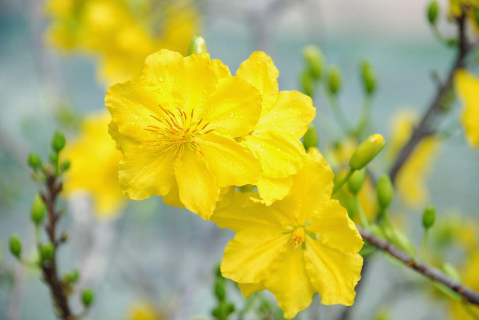 Những hình ảnh đẹp về mùa xuân | Ảnh hoa mai hoa đào