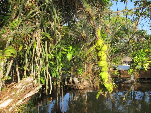 parasitic cactus