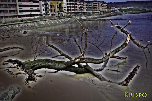rama grande tras tempestad en hondarribia