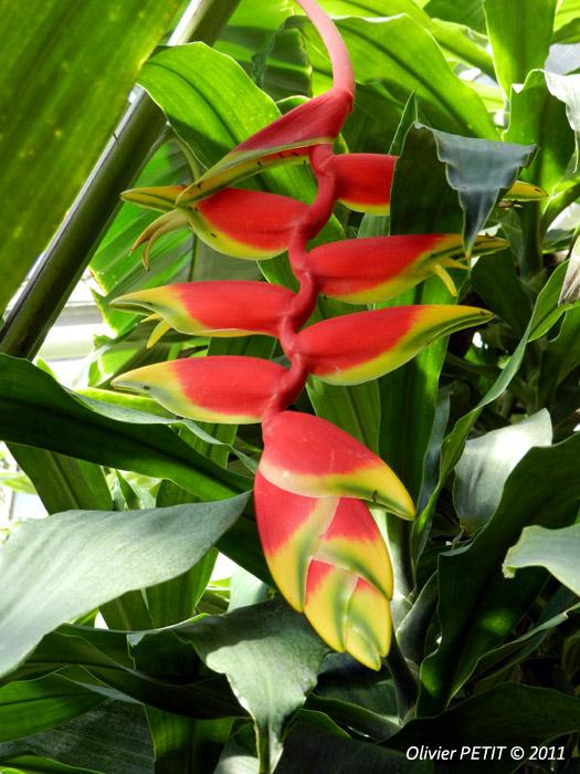 VILLERS-LES-NANCY (54) - Les serres du jardin botanique du Montet-Balisiers
