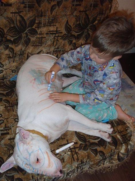 Собаки и дети                          00000801