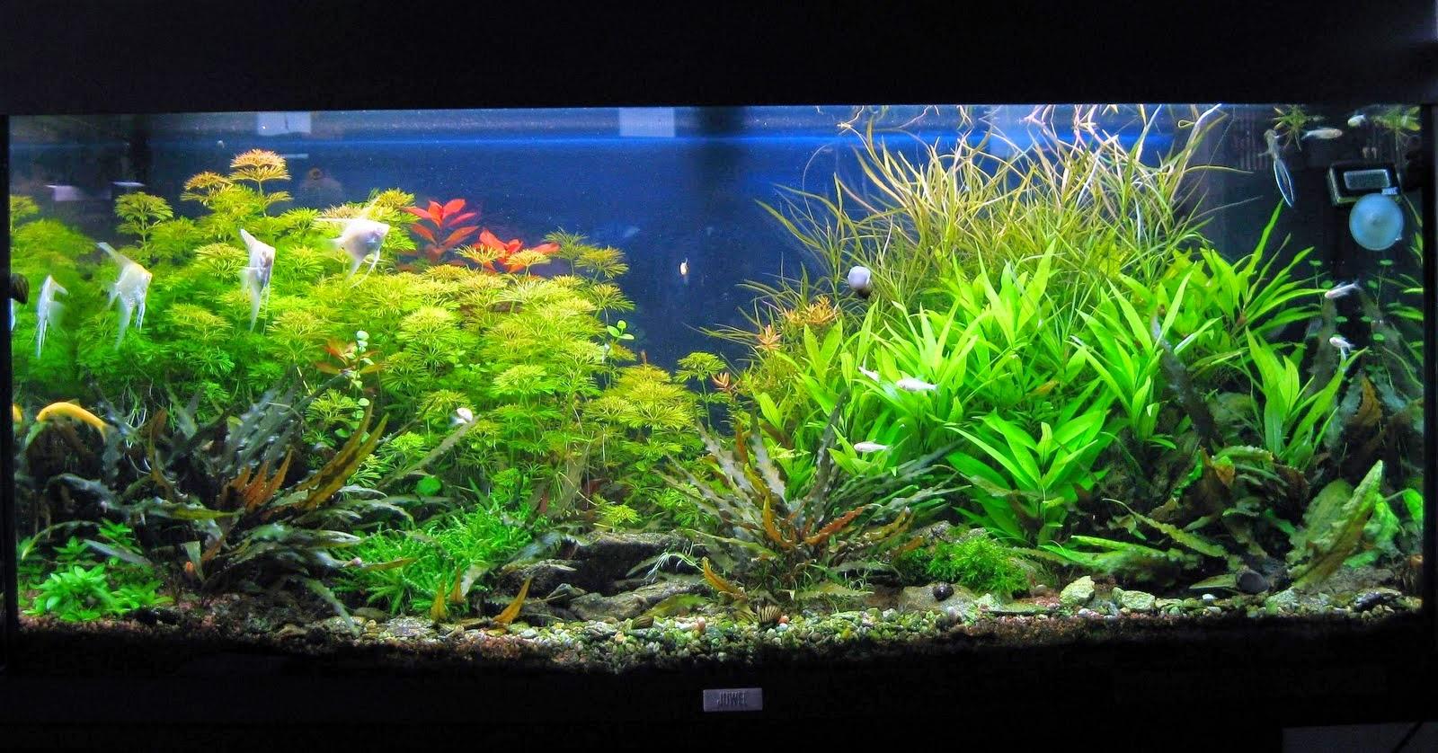 aquariumplanten belgie