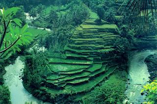 ubud bali,ubud,indonesia,bali ubud,nature