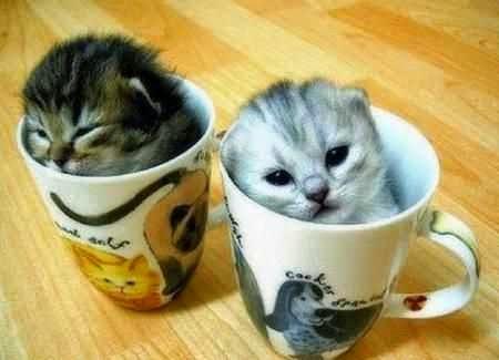 Foto kucing lucu dalam gelas