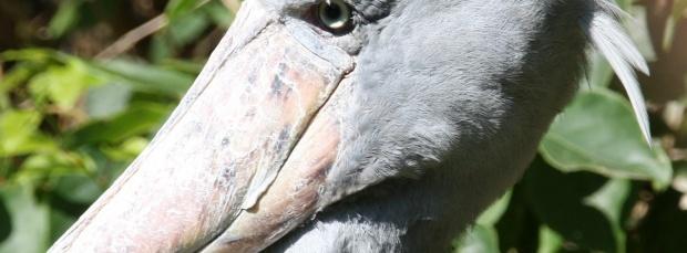 guzel kus facebook kapak resimleri+%252811%2529 35 En Güzel Facebook Kuş Kapak Resimleri indir