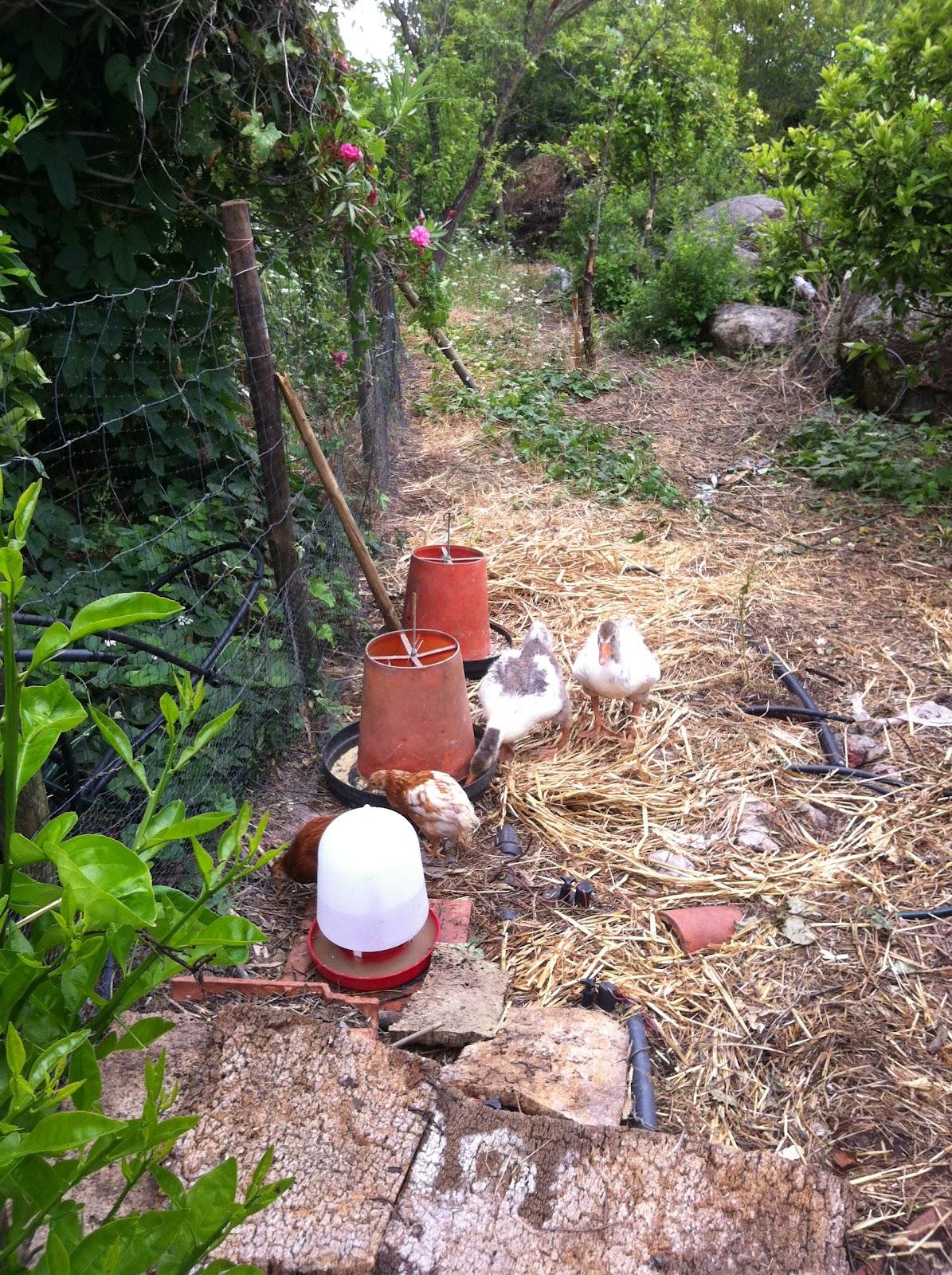 Coisas do jardim, do pomar e da horta Iniciando a minha horta