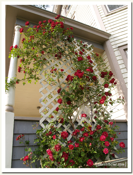 Nancy lindemeyer 39 s journal creative use of open space light airy - Climbing rose trellis ...