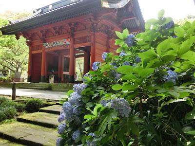 妙本寺のアジサイ
