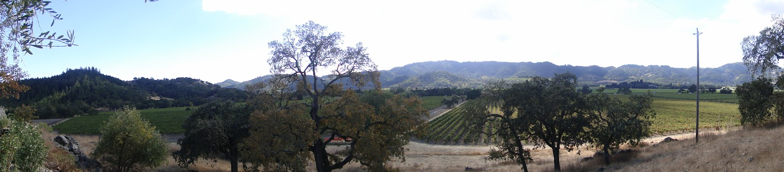 Dreaming Tree Winery Tours