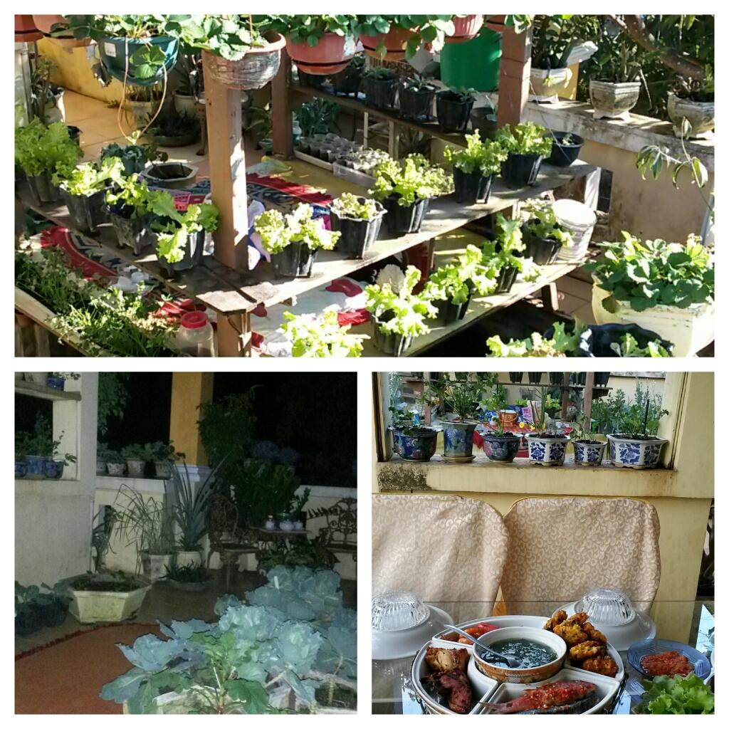 pekarangan lahan sempit menanam sayur di lahan sempit