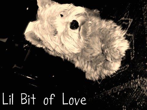 Lil bit of love