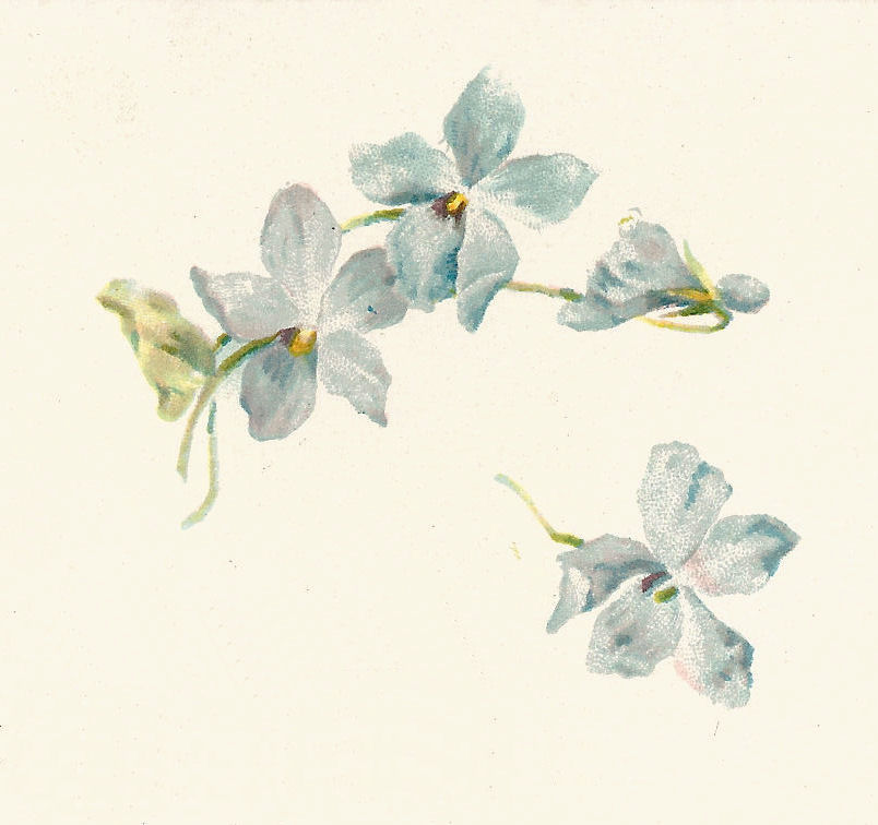 Antique images free flower clip art vintage graphic of 4 forget this is a delicate flower graphic of four forget me not flowers from a vintage poetry book the soft colors make this a precious illustration perfect for ccuart Image collections