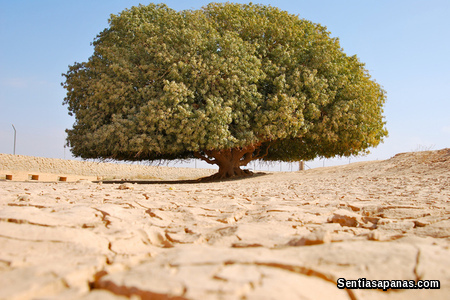The Tree of Rasulullah [2]