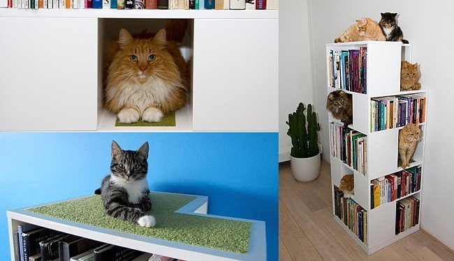 Memorias literarias estanter a para libros y s gatos - Estanterias para gatos ...