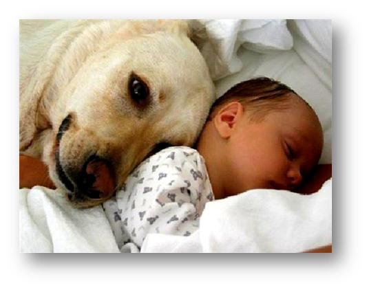 Adiestramiento canino: Evita los celos con el bebé