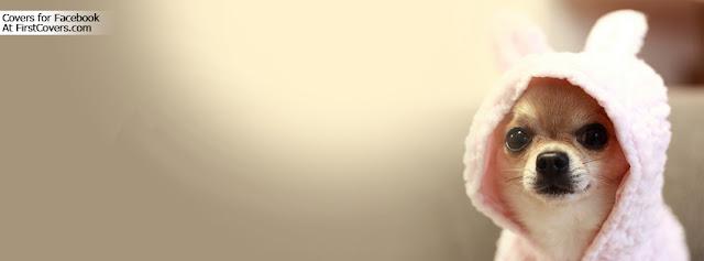 """<img src=""""http://1.bp.blogspot.com/-dSgduKKwIjg/UfR9PJcd4jI/AAAAAAAAC64/7le2yU46CAA/s1600/cute_dog-213.jpg"""" alt=""""Cute Facebook Covers"""" />"""
