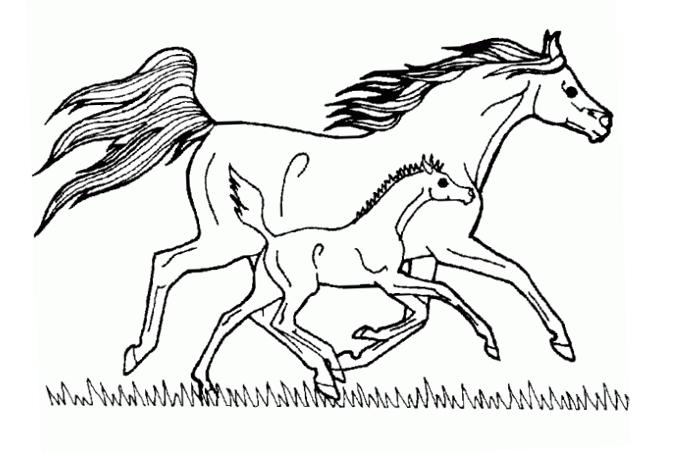 صورة حصان كبير وابنه يركضان لتلوين الصغار