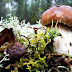 Wild Mushroom In Forest Widescreen Wallpaper
