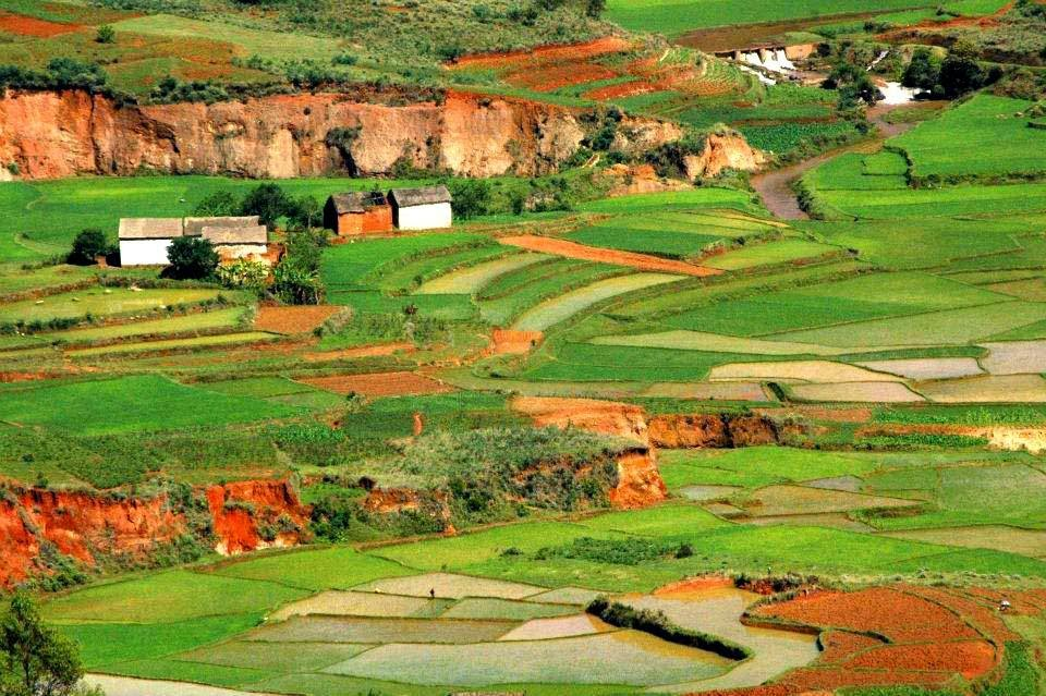 Rice Culture in Madagascar