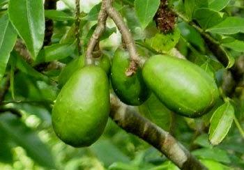 manfaat buah kedondong, khasiat buah kedondong, kedondong banyak manfaat