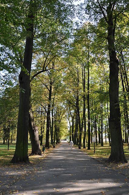 Końskie, zachowana stara aleja lipowa (kilkanaście drzew o obwodach 3,80 - 2,20 m) w parku miejskim. Widok od strony zachodniej. Fot. Bartłomiej Woźniak.