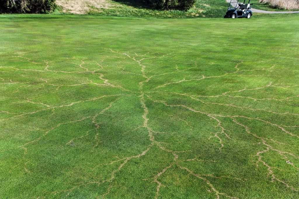 46 Unbelievable Photos That Will Shock You - Grass After a Lightning Strike