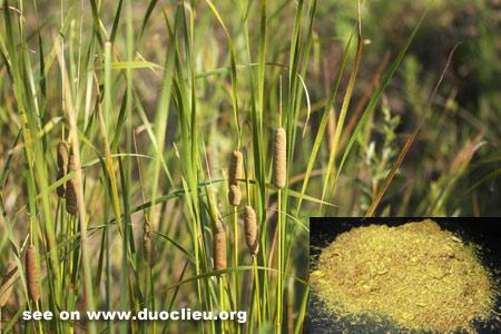 Cattail pollen (Puhuang)
