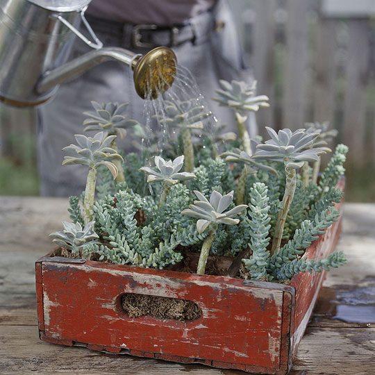 ideias originais jardim : ideias originais jardim: ideias mais originais aqui vão algumas ideias para pôr mãos à