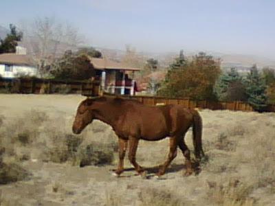 Wild Horse Reno Nevada