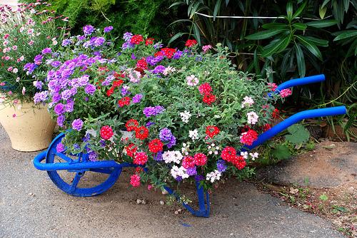 flores de jardim tipos: