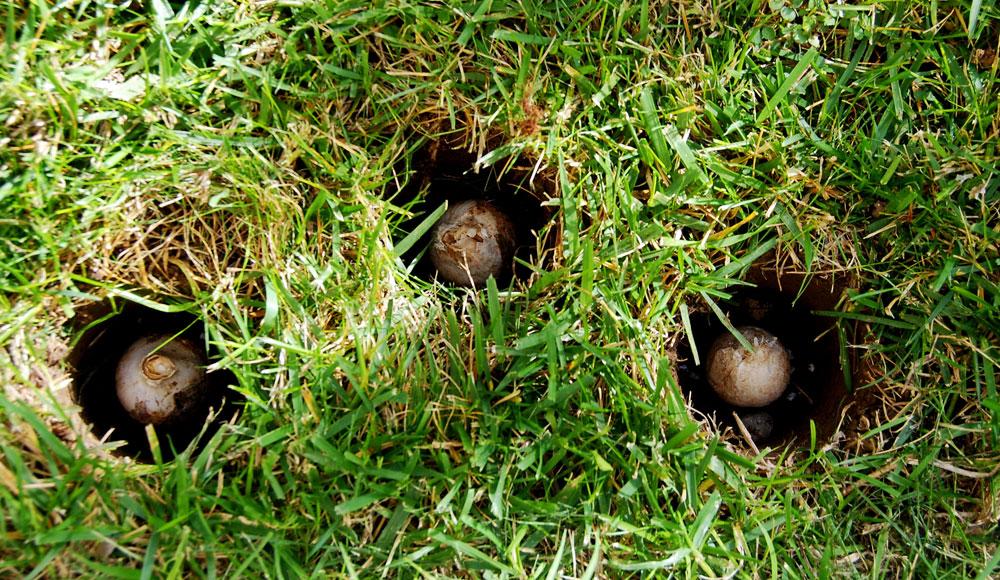 Il mondo in un giardino il momento di piantare i bulbi for Cosa seminare a febbraio