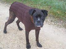 Hunde Rollkragen -  Pullover Artus,  nach Mass gestrickt