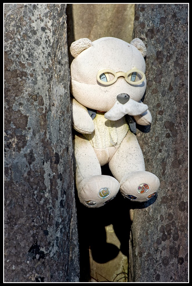 Nova Scotia; Long Cove; Teddy Bear