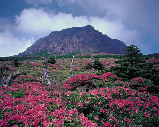 Jeju Island in South Korea ~ EntertainmentEnter